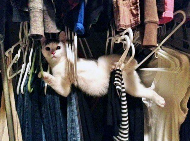 Sizi Yüksek Sesli Güldürecek 20 Şapşik Kedi