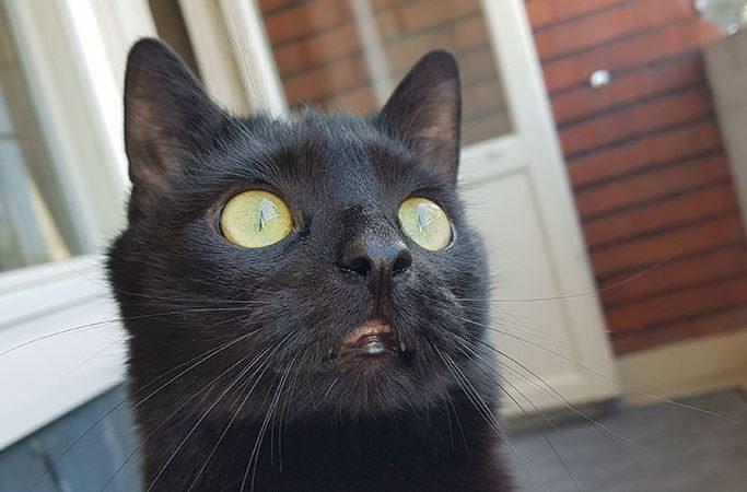 İlk Kez Balkona Çıkan Kedi Nuka ve Mükemmel Ötesi Tepkileri