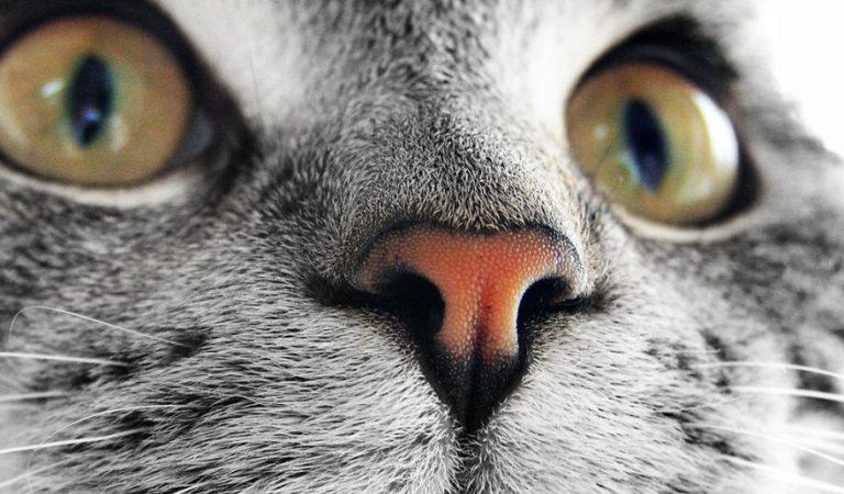 Kedilerin Burnunu Hiç Bu Kadar Yakından Görmemişsinizdir