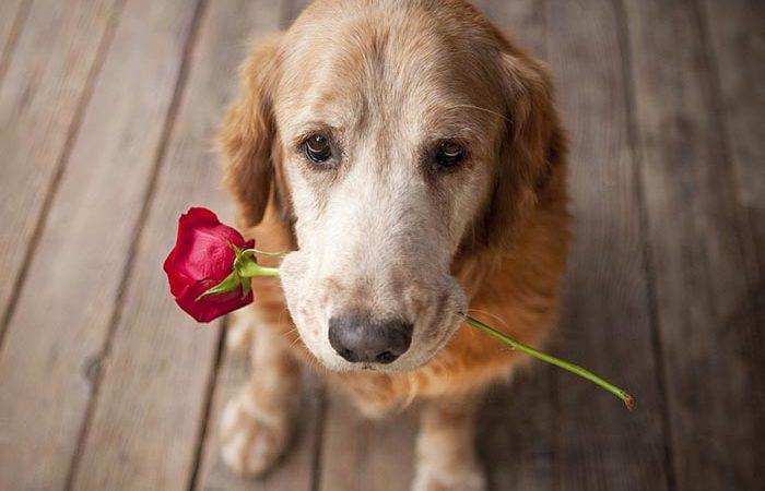Köpeklerin Karşılıksız Sevgisinin Kanıtı
