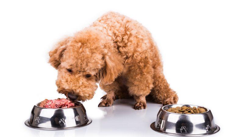 Çiğ Etli Köpek Mamaları Sahipleri İçin Büyük Risk